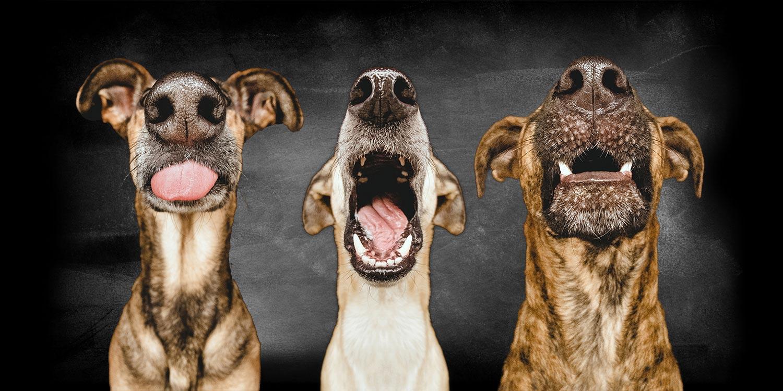 belcando-three-dogs
